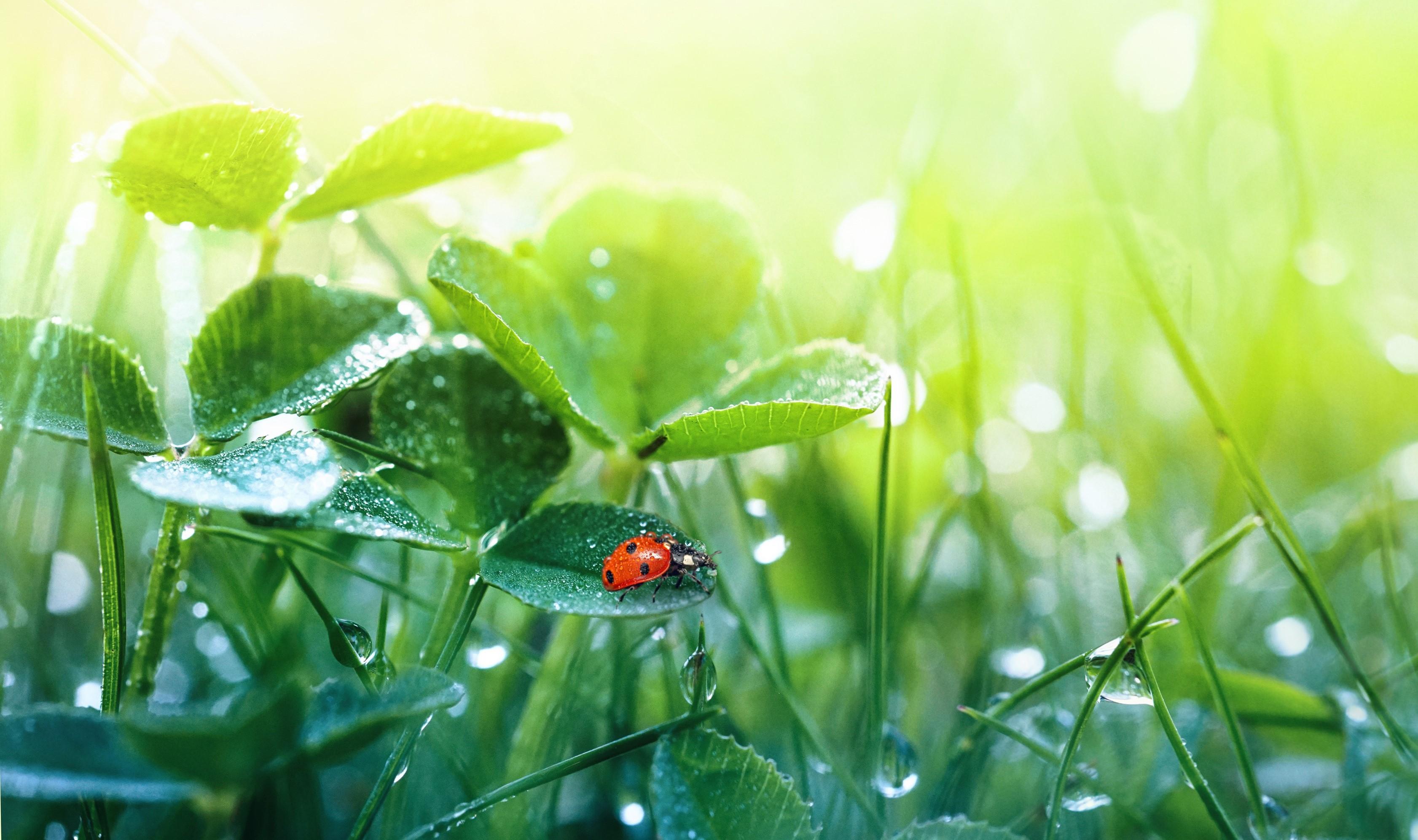 Geen herbiciden, niet meer maaien.